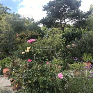 庭の写真・画像素材[1057503]