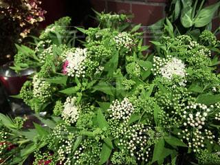 花の写真・画像素材[1057542]