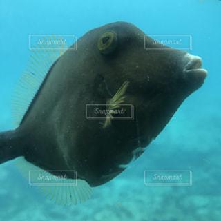 近くに水の下で泳ぐ魚のアップの写真・画像素材[1868809]