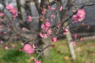 春の訪れ - No.1057920