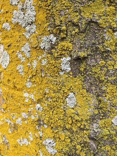 近くの木のアップの写真・画像素材[1058206]
