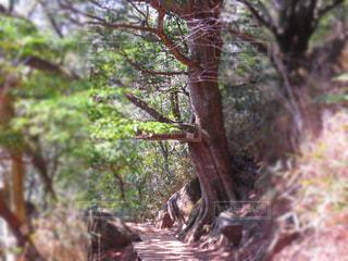 パワーを感じる木の写真・画像素材[1058721]