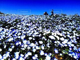 青と白の世界の写真・画像素材[1058729]