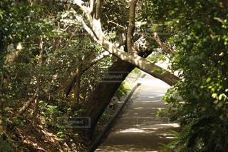 足摺岬公園の写真・画像素材[1059363]