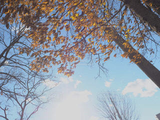 空の写真・画像素材[1066321]