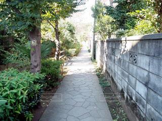 散歩風景の写真・画像素材[1069465]