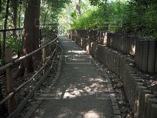 木漏れ日の写真・画像素材[1069472]