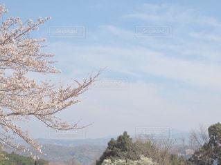 桜景色の写真・画像素材[1091989]