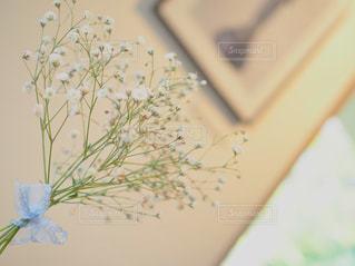 かすみ草の写真・画像素材[1227934]