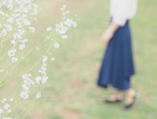 春の写真・画像素材[1495555]