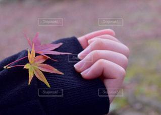 花を持っている手の写真・画像素材[1564462]