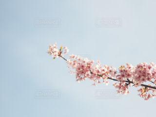 自然の写真・画像素材[2588419]