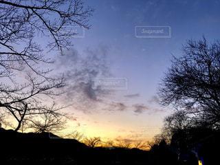 夕日の前の木の写真・画像素材[2810032]