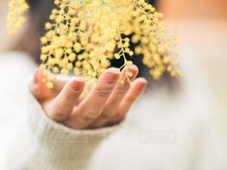 花を持つ手の写真・画像素材[3579045]