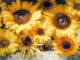 花のクローズアップの写真・画像素材[3579061]