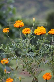 近くの花のアップの写真・画像素材[1062878]