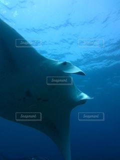 水面下を泳ぐ魚たちの写真・画像素材[1063181]