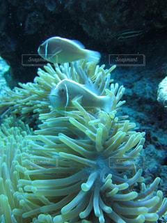 近くに珊瑚のアップ - No.1063232