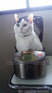 鍋の上に座って猫の写真・画像素材[1064322]