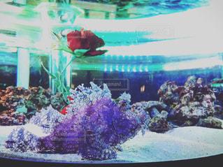 手前が魚の写真・画像素材[1058688]