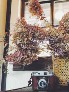 近くの花のアップの写真・画像素材[1058751]
