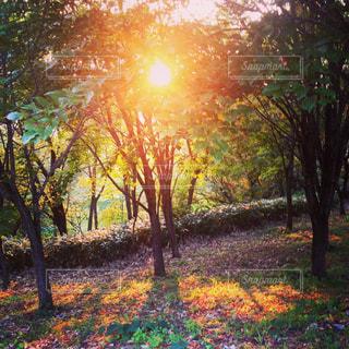 虹色に照らされた樹木の写真・画像素材[1059534]