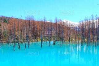 プールの水でカモメの群れの写真・画像素材[1060249]