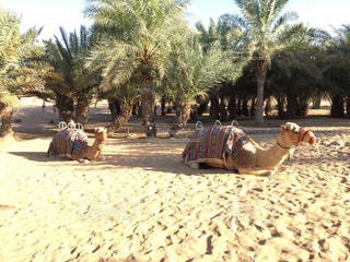 砂の中を歩く人々 のグループ - No.1079028