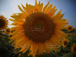 近くの花のアップの写真・画像素材[1079039]