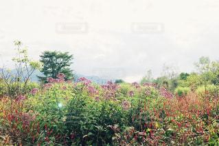 北海道の花畑の写真・画像素材[1063291]