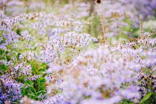 小花の写真・画像素材[1163463]