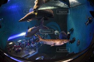 魚と人の写真・画像素材[1214768]