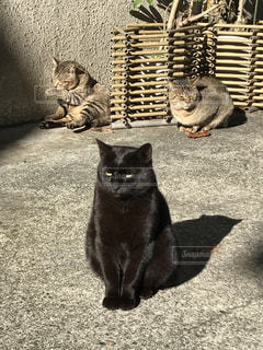 地面に座って黒い猫の写真・画像素材[1059904]
