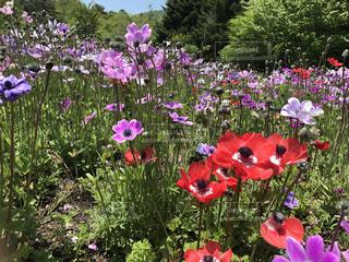 花の写真・画像素材[1059965]