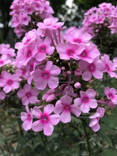 花の写真・画像素材[1059969]