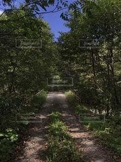 森林を抜けるまっすぐな道の写真・画像素材[2719575]