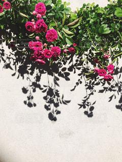 近くの花のアップ - No.1169859