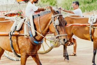 馬車を引く馬の写真・画像素材[2355123]