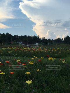 雲と花畑の写真・画像素材[1062198]