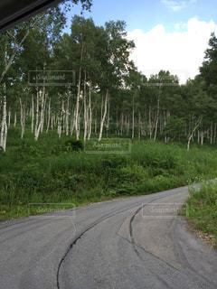 木立を行くの写真・画像素材[1062205]