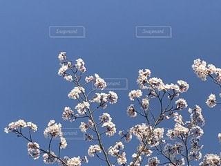 春の写真・画像素材[1134351]