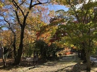 秋の小道の写真・画像素材[1585285]