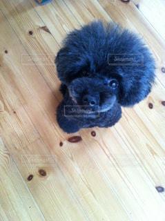 犬の足にも優しいパイン材の写真・画像素材[1060422]