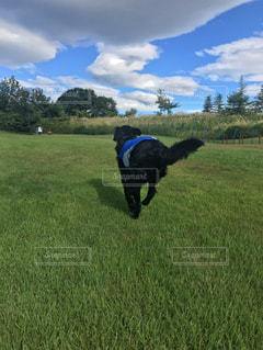 芝生のドッグランで走る犬Part.2の写真・画像素材[1061853]