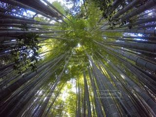 竹林の写真・画像素材[1062429]