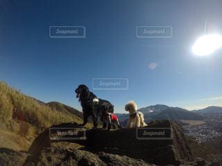 犬たちのライオンキング風の写真・画像素材[1063264]