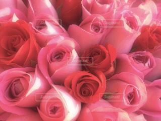 赤とピンクのバラの花束の写真・画像素材[1063309]