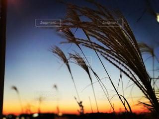 背景の夕日の写真・画像素材[1063329]