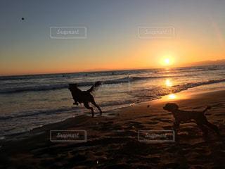 夕陽を見ながら海遊び♪の写真・画像素材[1067588]