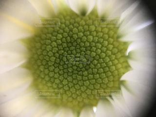 近くの花のアップの写真・画像素材[1213869]